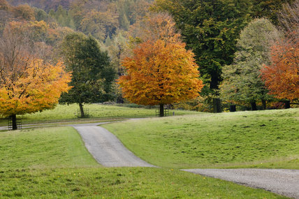 An autumn view of the deer park at Studley Royal Water Garden, North Yorkshire