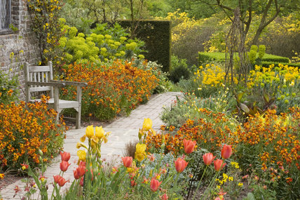 The spring planting of red, orange and yellow tulips and wallflowers in the Cottage Garden at Sissinghurst Castle Garden, Kent