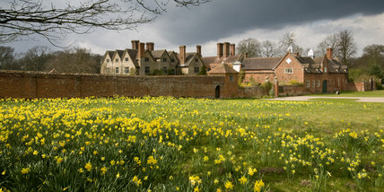 A view from the east, over fields of daffodils, to Packwood House, Solihull, Warwickshire, a restored Tudor house