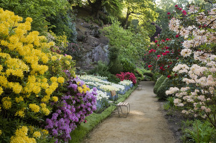 Azaleas, rhododendron and tulips in the garden which was created in the late eighteenth century by Samuel Greg, the mill owner, and his wife Hannah, to complement their house