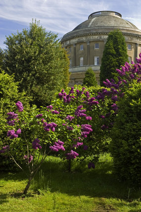 A view over the lilacs to Ickworth, Bury St Edmunds, Suffolk