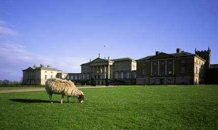 Sheep grazing in front of the north front of Kedleston Hall, Derbyshire