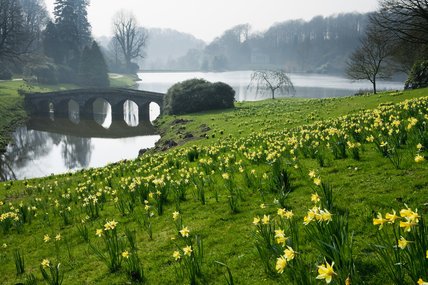 The Palladian Bridge with daffodils in a soft spring light at Stourhead, Wiltshire, in March