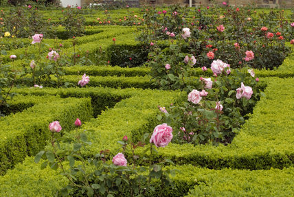 Box hedging in the Rose Garden at Seaton Delaval Hall, Northumberland, designed in 1947 by James Rusell with further enhancements by Lady Hastings