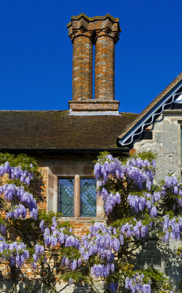 Detail of a window surrounded by climbing wisteria on the Courtyard walls at Baddesley Clinton, Warwickshire