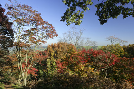 Autumnal colour at Winkworth Arboretum in Surrey