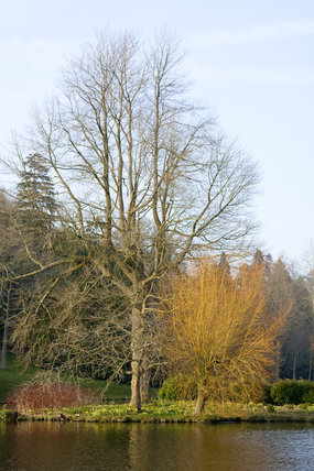 Trees without their leaves, beside the lake at Stourhead, Wiltshire, in March