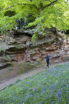 Bluebells carpeting the ground in front of the geological feature in the garden, created in the late eighteenth century by Samuel Greg, the mill owner, and his wife Hannah, to complement their house