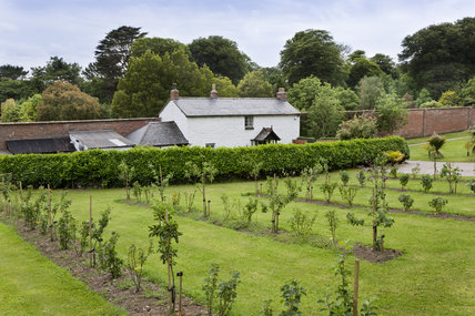 The new orchard at Trengwainton Garden, Cornwall.