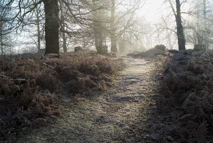 A walk through the parkland at Knole, Kent, in December
