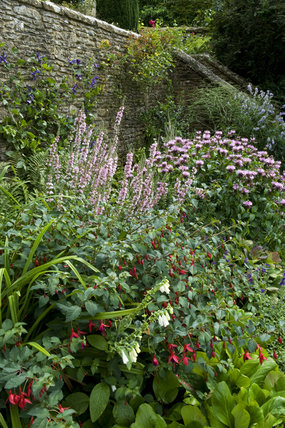 Lythrum and Monarda work well together in the border with Fuchsia providing stronger colour, in the Armillary Court at Snowshill Manor, Gloucestershire