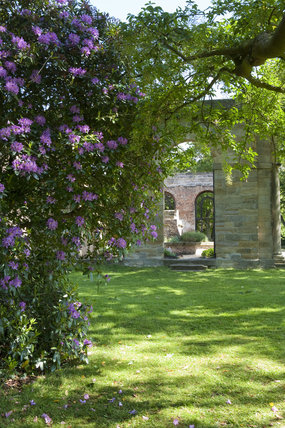 Rhododendrons in the foreground with the ruins of the eighteenth century Orangery beyond at Gibside, Newcastle upon Tyne