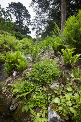 The Fernery in the garden at Greenway, Devon, which was the holiday home of the crime writer Agatha Christie between 1938 and 1976