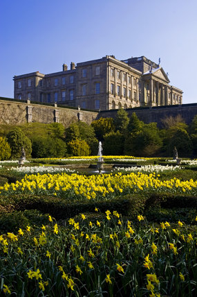 Looking over the early eighteenth century Dutch Garden in spring with daffodils in bloom towards the house at Lyme Park, Cheshire