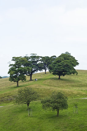View over the parkland from the roof of Lyme Park, Cheshire