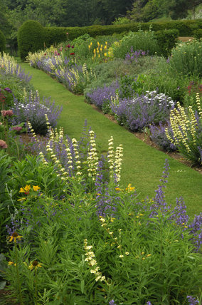 Blue and yellow planting with Sisyrinchium striatum in the borders at Mottistone Manor Garden on the Isle of Wight