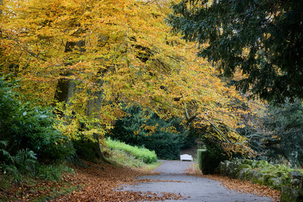 Beautiful autumnal colours on the walk on top of the Rustic Bridge at Studley Royal Water Garden which adjoins Fountains Abbey, North Yorkshire