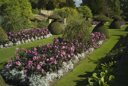 Dahlia beds in early autumn at Hinton Ampner, Hampshire