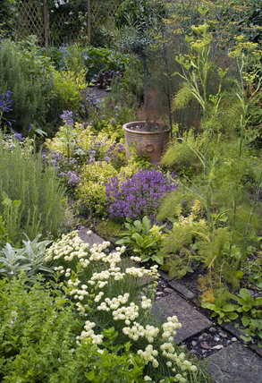 The Herb Garden in July with a very pretty combination of the blues, yellows and cream of santolina, lavender, thyme, rosemary and fennel at Lamb House, Rye, East Sussex