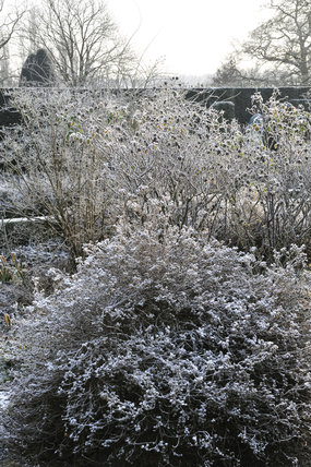 Winter planting accentuated by frost in January at Sissinghurst Castle Garden, near Cranbrook, Kent