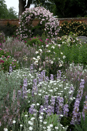 Lychnis and Campanula in the foreground with Rosa