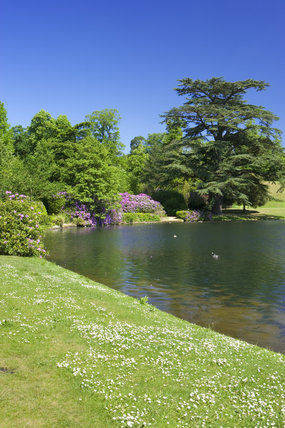 The lake and rhododendrons at Claremont Landscape Garden in Surrey