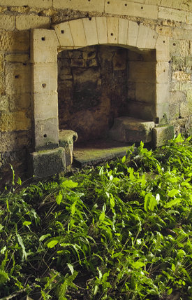Hart's Tongue and Maidenhead Spleenwort ferns growing in the empty basement rooms at Seaton Delaval Hall, Northumberland, built between 1718 and 1728 for Admiral George Delaval and designed by Sir John Vanbrugh