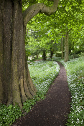 Path through the woodland garden at Newark Park, Gloucestershire.