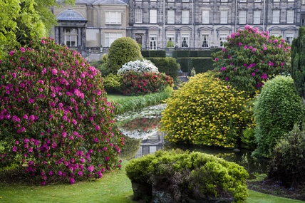 The Rhododendron Ground around the pool in front of the house (not owned by the NT) Biddulph Grange Garden, Staffordshire