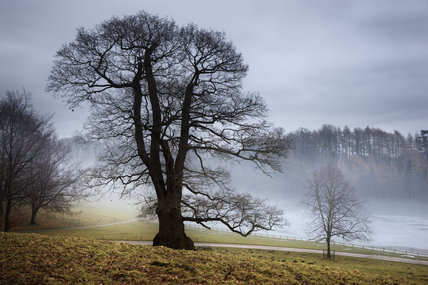 An atmospheric misty, winter view of trees in the deer park at Studley Royal Water Garden, North Yorkshire
