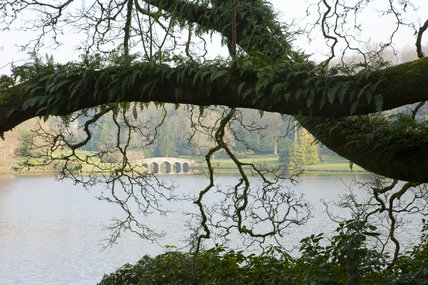 Lichen and ferns growing on a tree branch at Stourhead, Wiltshire