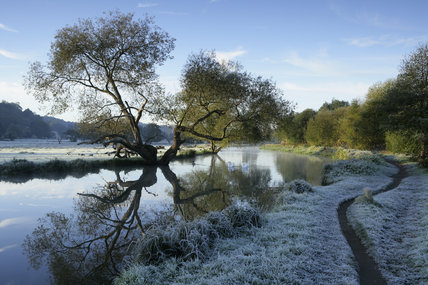 A frosty winter scene with willow trees along the towpath at the River Wey Navigations, Surrey
