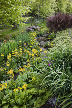 The Stream Garden in June at Trengwainton Garden, Cornwall.