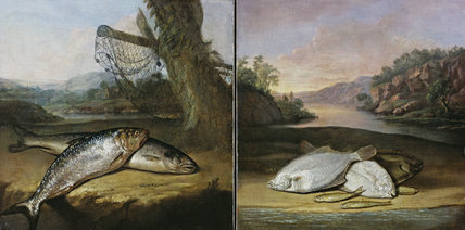 Two of the fish paintings from the Fishing Room at Kedleston Hall