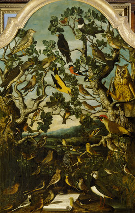AA/P/178 'The Birds of Britain',formerly ascribed to J. Bogdani now thought to be an unknown artist. Upper Gallery, Anglesey Abbey.Credit line : Anglesey Abbey, The Fairhaven Collection (The National Trust), ©NTPL/John H
