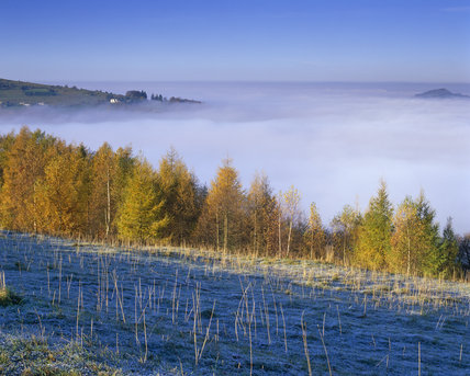 Frost covers the foreground vegetation at Rodborough Common, near Stroud in Gloucestershire, whilst early morning mist still lies heavily in the valley