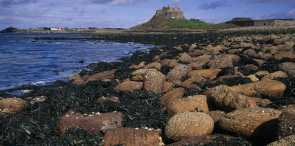 A panoramic view of Lindisfarne Castle with the nearby rocky beach in the foreground