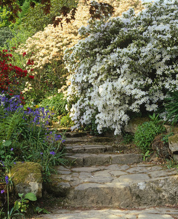The Quarry Steps with planting of azaleas in the garden at Scotney Castle, Kent