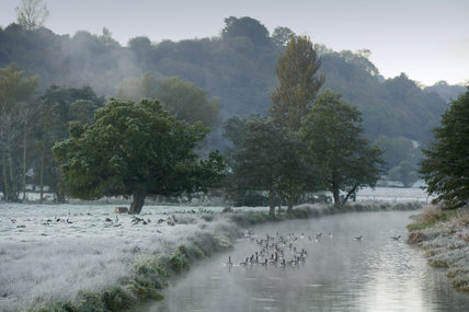 A flock of birds in a frosty winter scene at the River Wey Navigations, Surrey