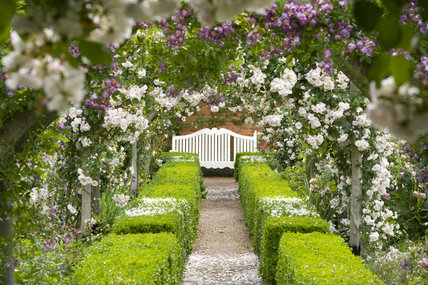 View through the pergola towards a pretty bench in the Rose Garden at Mottisfont Abbey, Hampshire