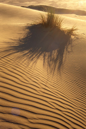 A view across an area of rippled sand, the glow of the sun can be seen in the background and a small area of reed grass casts a large shadow on the sand