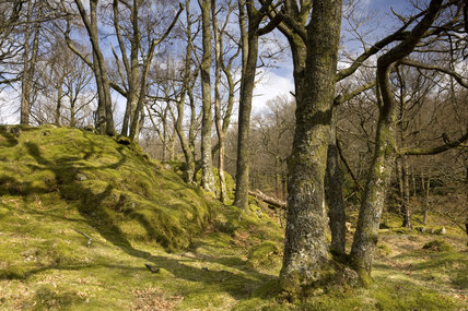 Ashness Wood, Derwentwater, Lake District, Cumbria, in early spring