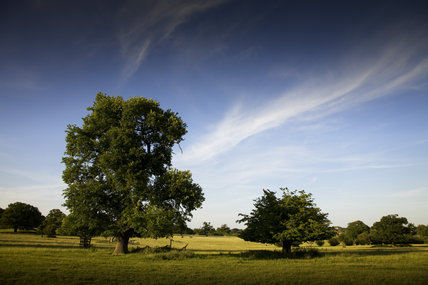 The beautiful landscape of Hatfield Forest, Essex
