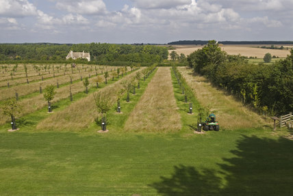 Mowing the long grass in the Orchard at Lyveden New Bield, Peterborough, Northamptonshire