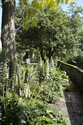 Garden and plants alongside the River Itchen and C18th Winchester City Mill, Hampshire