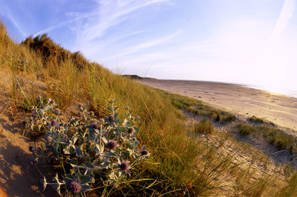 A view across a sand dune looking up towards a blue sky
