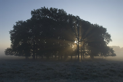 Atmospheric early morning scene with sun rising behind trees in the magnificent 700-acre deer park at Petworth House, West Sussex