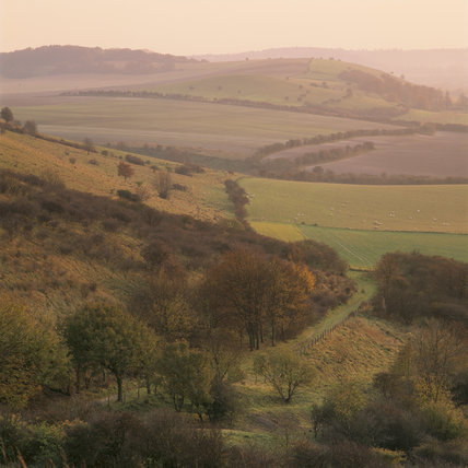 View across the valley on the Ashridge Estate at dusk, showing the autumnal colourings of the countryside