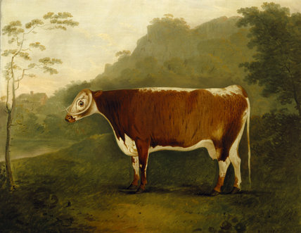 BRINDLED BEAUTY, SIRE SHAKESPEARE - a long horned bull painted by John Boultbee