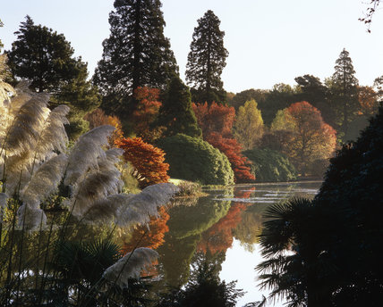 Pampas grasses and autumnal colour in the foliage at Sheffield Park, East Sussex